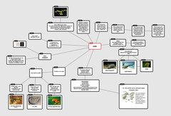 Popplet-Anfibi-web.jpg