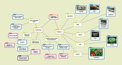 Popplet-Rettili-web.jpg