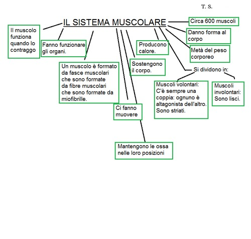muscoli1a.png
